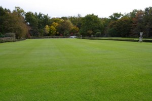 Overseeding lawns