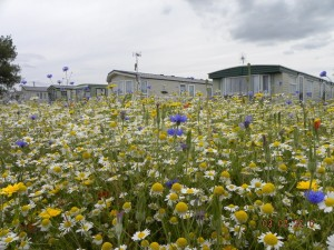 Meadows and Holiday Homes