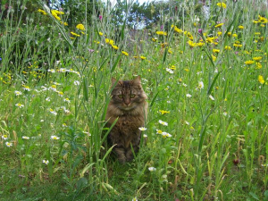 cat in meadow