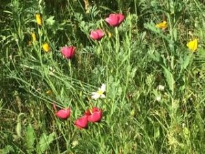 Mini Meadow 2