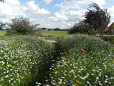 Wildflower Seed 100% UK Mixes