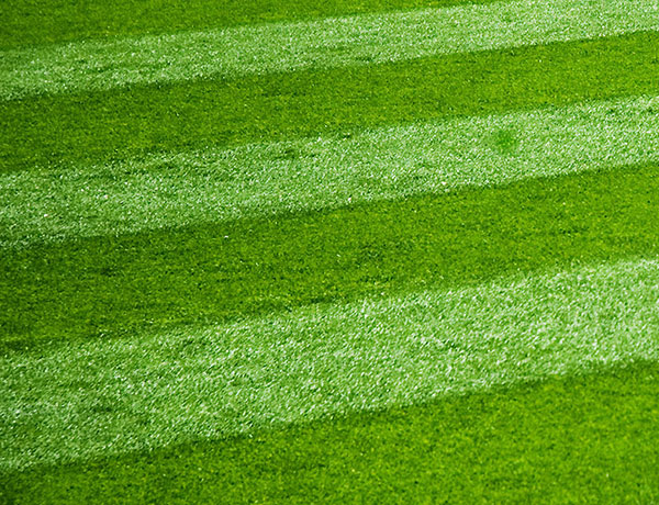 Grass seed for Sports fields