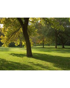 Lawn Grass Seed For Shady Areas