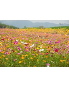 Simple Summer Wildflower Meadow