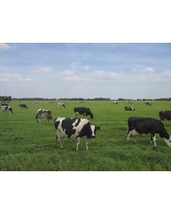 Pasture Grass Seed Mixture 3 To 5 Years Acre