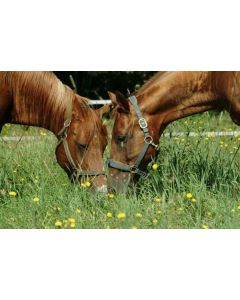 Gold Standard Natural Paddock Grass Seed Acre ( MEDIUM to HEAVY LAND) 13.5kg