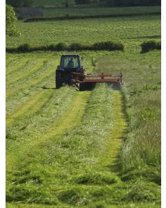 Short Grass Seed For Silage Production Acre
