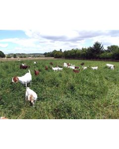 Grass Seed Mix For Goat Grazing Acre