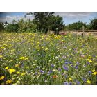 Instant Sunshine Annual/Perennial 100% Seed Mix
