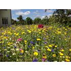 Wild Flower Instant Sunshine Mini Meadow