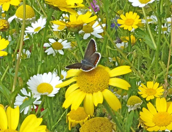 How To Grow from Wildflower Seed Packets