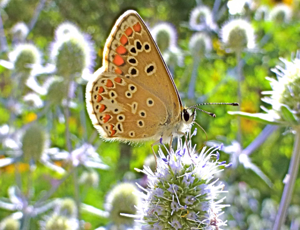 Wildflowers and Butterflies