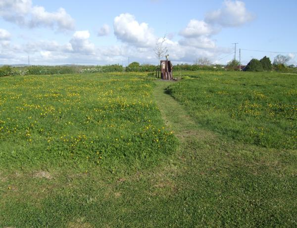 Large perennial meadow area in development
