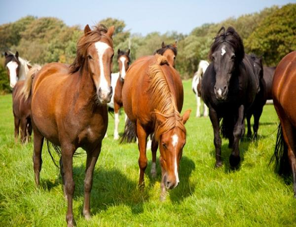 Have your Horse Paddocks been trashed over winter.