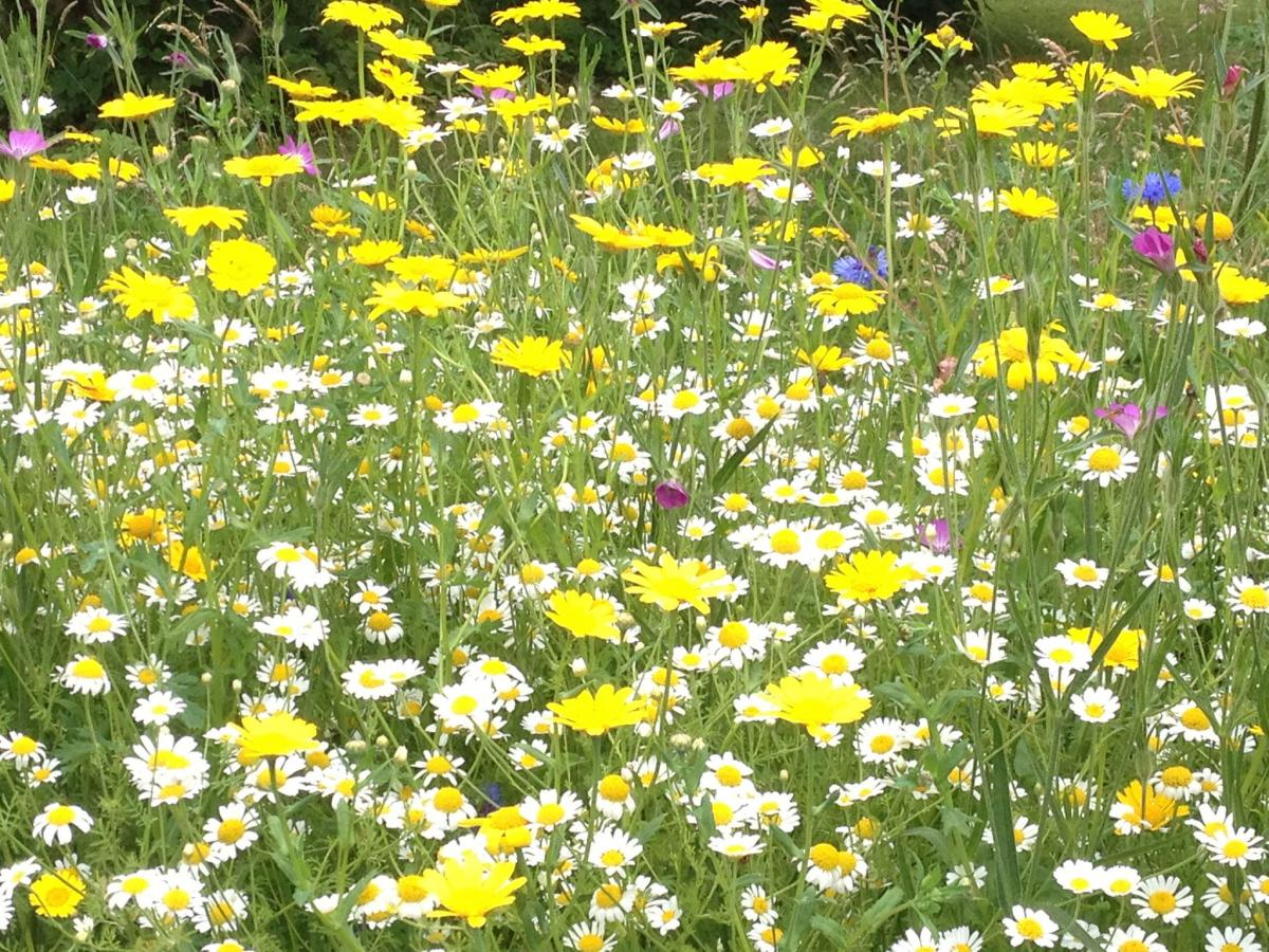 How to create a wild flower meadow