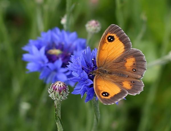 How to Plant Wildflower Seed