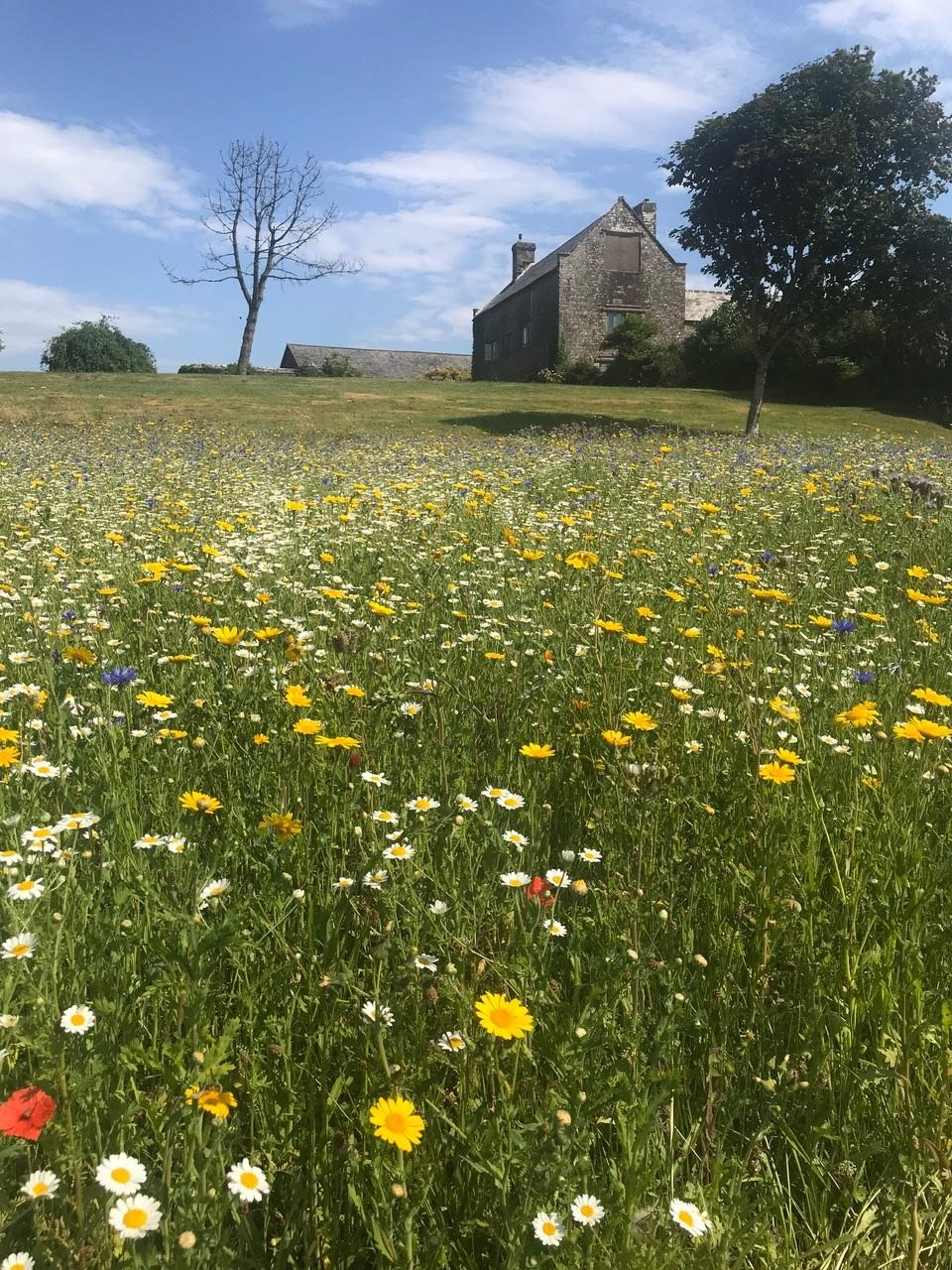 What are Wildflower Seed Mixes