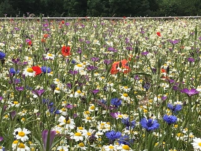 BBC Gardeners World promotion of wildflower meadows