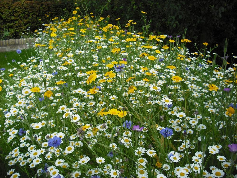 Wild Flower Seed Rates What & Why