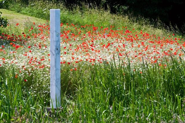 Field Poppies at a sculpture park