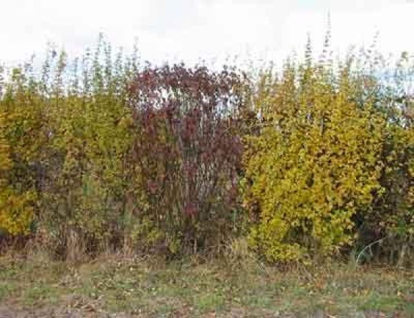 Native Hedging How to Establish and Maintain it.
