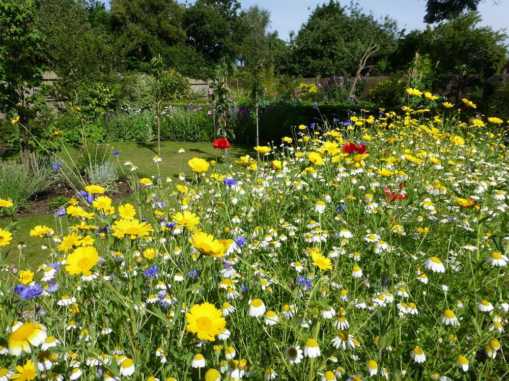 Cornfield Annuals How to Create