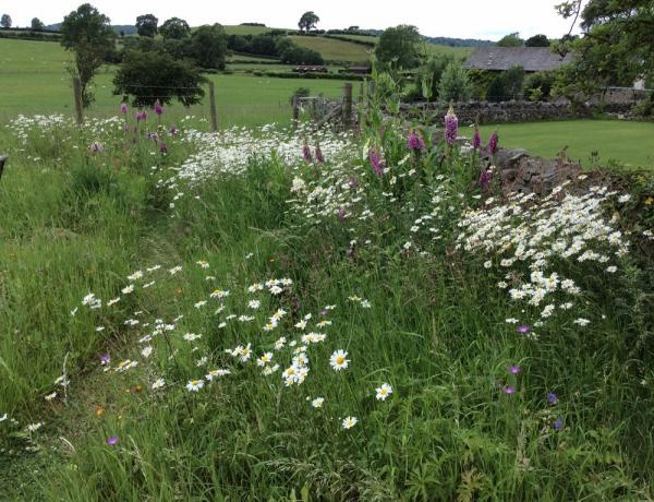 Established Wildflower Meadow
