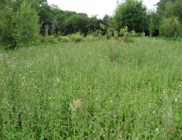 Information on the common grassland weeds