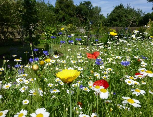 Creating a Meadow with Wildflower Seed