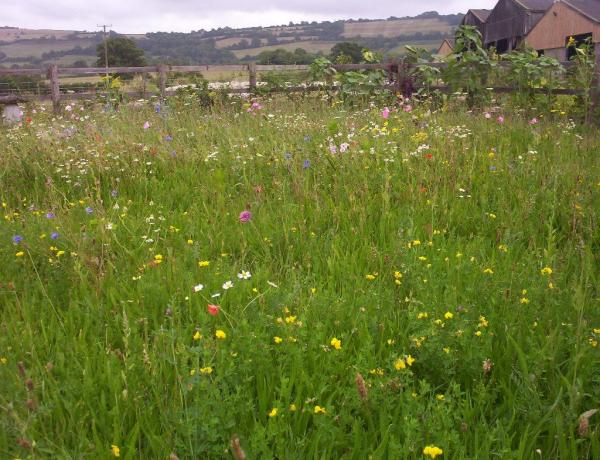 How to create a wild flower meadow.