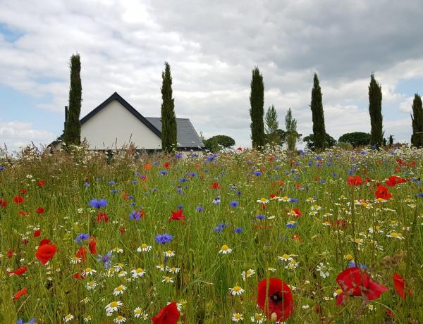 Native Traditional British Wild Flower Seed Mix
