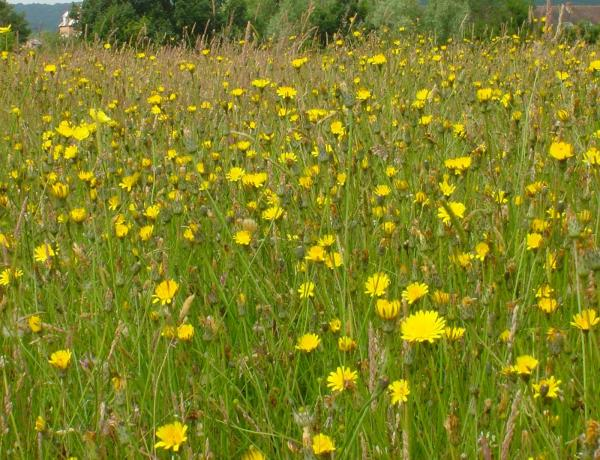 Sowing 100% Wildflower seed mixes