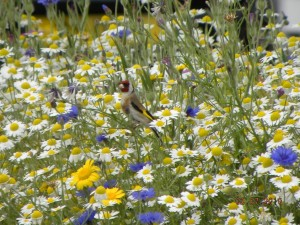 bird in wild flowers