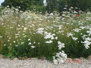 Meadow in formal Garden