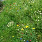 Mini Meadow